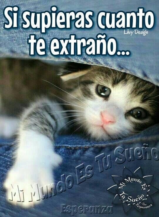Frases De Te Extraño En Imagen De Tiernos Gatitos Para
