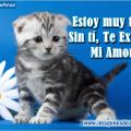 Frases De Te Extraño En Imagen De Tiernos Gatitos Para Regalar a Tu Pareja