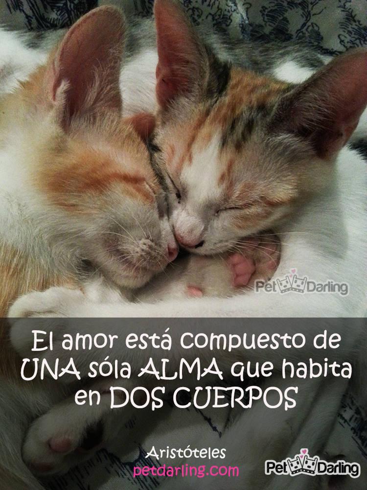 Imágenes De Gatitos Tiernos Con Frases De Amor Para Dedicar a Mi Novio