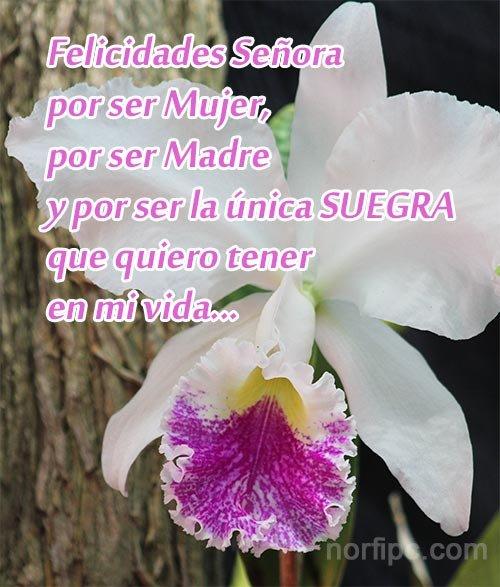 Frases De Amor Para Mi Suegra Este Día De Las Madres