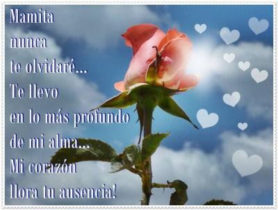 Lindas Imágenes Con Flores Para Dedicar a Mi Madre