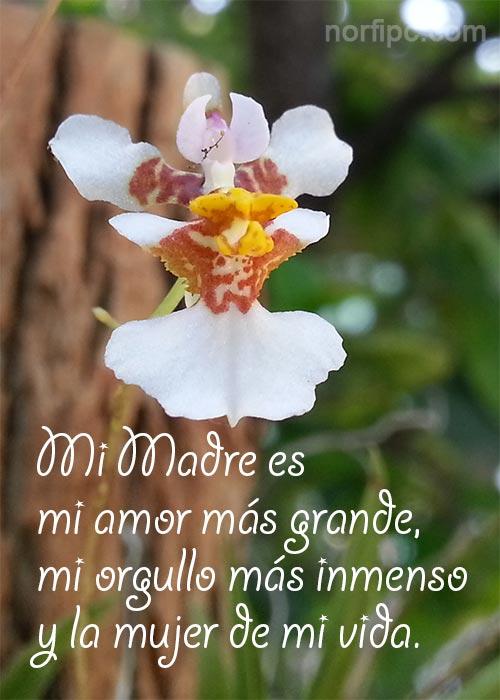Imágenes Con Frases De Amor a Mi Querida Madre